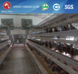 Equipo automático suramericano de las aves de corral del pollo para las capas y la parrilla