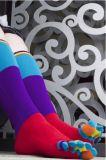 虹は鮮やかなつま先5のソックスを縞で飾る