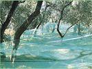 Зеленая оливка собирая плетение для плодоовощей