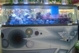 Tanque de peixes acrílico (MR-004)
