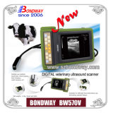 Exporter chinês de Digital Veterinary Ultrasound Imaging System Bw570V