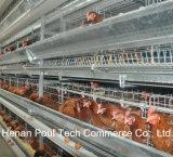 H tapent la cage de poulet pour le matériel de ferme
