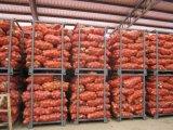신선한 빨간 양파 새로운 작물 수출 2017 좋은 품질