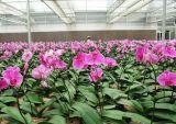 야채와 꽃 성장하고 있는을%s 다중 경간 갱도 온실