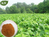 Poeder van het Uittreksel van het Blad van de Moerbeiboom van China/Mulberry het Van uitstekende kwaliteit Leaf P.E