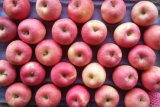 Supplier con esperienza di Red Fresh FUJI Apple Counts 100-113-125