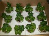 Plantes et fleurs artificielles de la centrale succulente Gu-Jys-00030