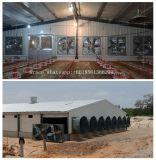 Strumentazione automatica di pollicultura della griglia dalla fabbrica con la costruzione della tettoia dell'acciaio