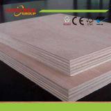Bintangor / Pine / Poplar / Birch / Okoume / Pencil Contreplaqué en placage de cèdre pour meubles