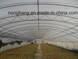 Das preiswerteste Porzellan XL landwirtschaftlich, Handelsplastikgewächshaus