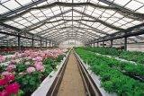 Invernadero multi del palmo de la agricultura de la hoja de la PC para el pepino con el sistema de calefacción