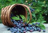 Uittreksel van de Bes Acai van 100% het Natuurlijke voor Voedsel en Supplement