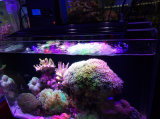 2017 het Heetste 216W Licht van het Aquarium WiFi voor Koraalrif