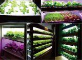 El LED crece el módulo ligero para la cultivación de la planta