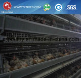 La H digita la strumentazione automatica delle gabbie del pollo dell'uovo del pollame per l'azienda agricola di pollo
