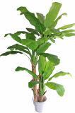 정원을%s 인공적인 바나나 나무