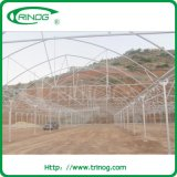 Vegetable를 위한 향상된 Hydroponics Greenhouse