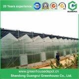 Tipo surtidores de China Venlo de los fabricantes del invernadero