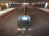 Heißer Verkaufs-automatisches Geflügelfarm-Gerät für Brathühnchen-Haus