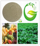 Amino Acid fertilizante soluble en agua