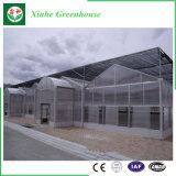 Grande serre chaude de verre à vitres de polycarbonate de Multi-Envergure