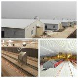 Casa prefabricada de la granja de pollo con el equipo de granja auto de pollo