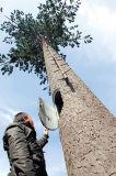 Torre de acero del árbol de Glavanized para la telecomunicación