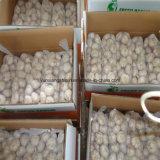 Свежий поставщик чеснока 2016 в Китае