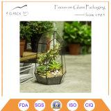 Terrarium en verre géométrique succulent irrégulier Wardian