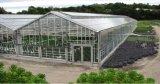 Estrutura de aço galvanizado Cobertura de vidro Usado estufas comerciais