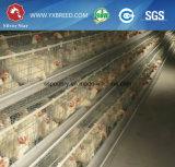 Equipo de la avicultura de África Nigeria para los pollos de la capa (A3L90)