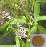 Выдержка вербены лимона потери веса 100% естественная: 12:1; 20:1; 40:1 /Aloysia Triphylla