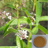 Estratto grezzo della verbena del limone degli ingredienti di perdita di peso: 12:1 ~40: 1