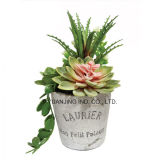 Flor artificial fijada Succulents de la decoración casera de la alta calidad