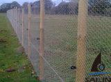 Las aves de corral de Sailin cercan la cerca del jardín