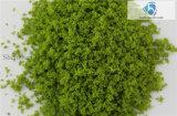 Baumaterial; Feines Tree Powder für Landscaping