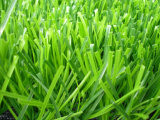 Césped artificial artificial de la hierba/de la alfombra de la hierba/del campo de fútbol de interior