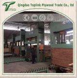 Finger Joint laminado de madera contrachapada / Enviado a Vietnam Mercado de encofrado de madera para Constrctiion / Combi Core / 25mm película de Brown
