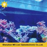 Lumière bleue imperméable à l'eau d'aquarium du blanc 54W DEL de DC12V DC24V RVB