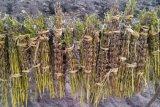Выдержка семени сезама повышая воспаление к восстановлению