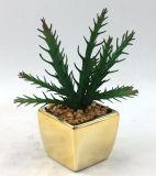 Succulent artificiale del POT del quadrato della decorazione di più grande formato