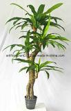인공적인 Bonsai 나무가 가정 장식적인 플라스틱에 의하여 설치한다