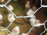 Плетение провода конкурентоспособной цены шестиугольное для Гондураса с высоким качеством