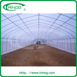 Ökonomisches Commercial Tunnel Plastic Greenhouse für Tomato Growing