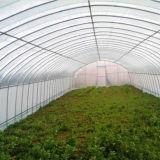 Serres van de Spanwijdte van de landbouw de Enige voor Verkoop met de Verkoop van de Fabriek