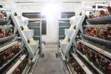 Grilleur et cage de couche dans la construction de ferme avicole