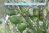 Het natuurlijke Areca Poeder van het Uittreksel van het Zaad