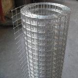 China-erstklassiger galvanisierter geschweißter Maschendraht für Aufbau und Zaun (WWM)