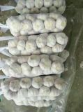 Piccolo aglio del sacchetto della maglia del raccolto nuovo