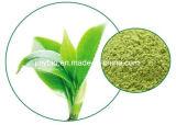 Estratto naturale del tè verde di 100%, EGCG e polifenoli del tè